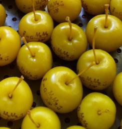 300 pommes gravées
